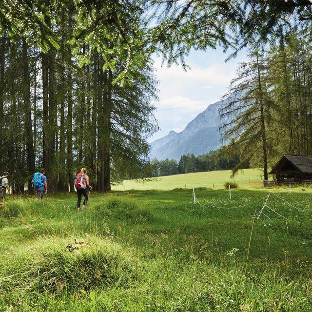 Kräuterspaziergang am Mieminger Plateau