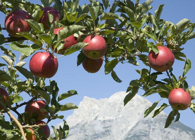 Obstbau-Ligges.jpg