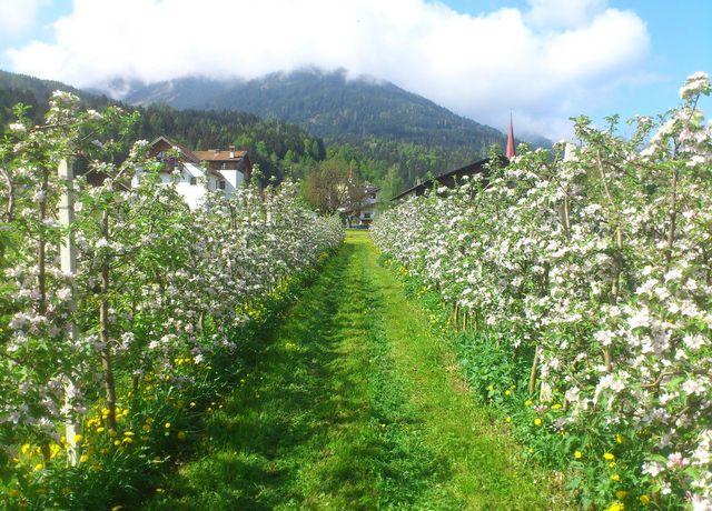 Obstbau-Ligges-Apfelbaeume.jpg