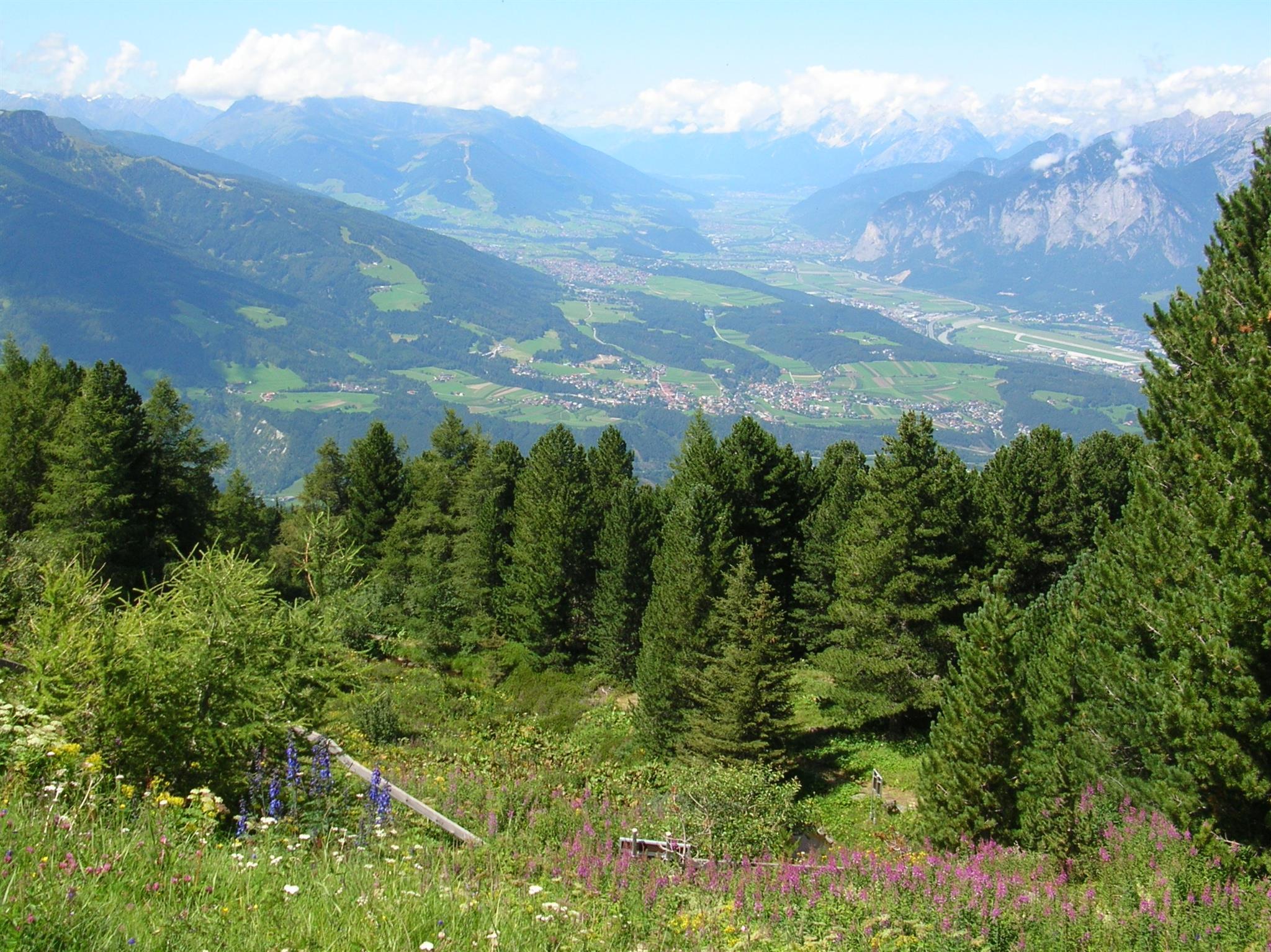 Alpengarten Patscherkofel